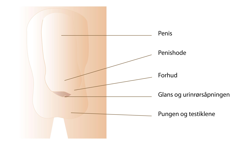 sort linje på penis